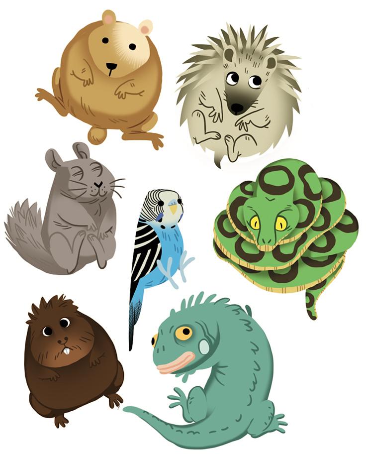 rusti'kid-fleurus-deviens un super véto-vétérinaire-chien-chat-illustration